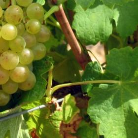 """une véritable philosophie du vin """"autrement"""""""