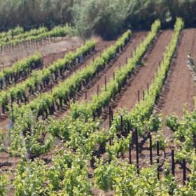 domaine viticole marseillan